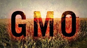 China to US: 'Take Your 60,000 Tons of GMO-Contaminated Corn and Shove It'