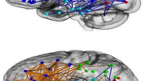 The hardwired difference between male and female brains could explain why men are 'better at map reading'