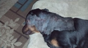 """Another Beloved Family Pet Shot by Cops at the Wrong House, Who Tell the Owner, """"Don't worry…the bill's on us"""""""