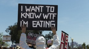 Battle over GMOs percolating in U.S., with 93 percent of Americans in favor of labeling