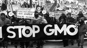 GMO: Just Ban It!