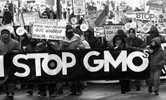 GMO Just Ban It!