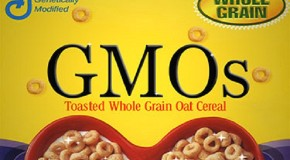 General Mills Drops GMOs…from Only ONE Kind of Cheerios. (Woo hoo.)