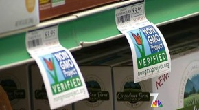 Shock: NBC's Today Show Airs Report on Non-GMO Shopping