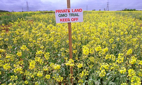 'World's first' farmer trial over GM crop contamination begins in Australia