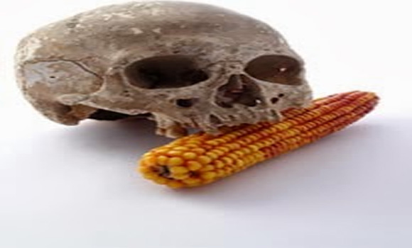 19 EU States reject GMO corn; Council approves anyway