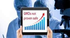 297 scientists, experts sign statement: GMOs not proven safe
