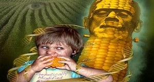 Confirmed DNA From Genetically Modified Crops Can Be Transferred Into Humans Who Eat Them