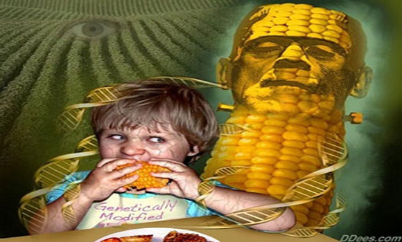 Confirmed: DNA From Genetically Modified Crops Can Be Transferred Into Humans Who Eat Them