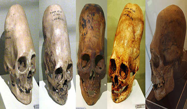 DNA Analysis Of Paracas Elongated Skulls Released