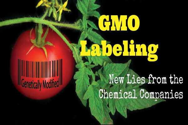 Food, biotech groups banding together to influence GMO labeling efforts