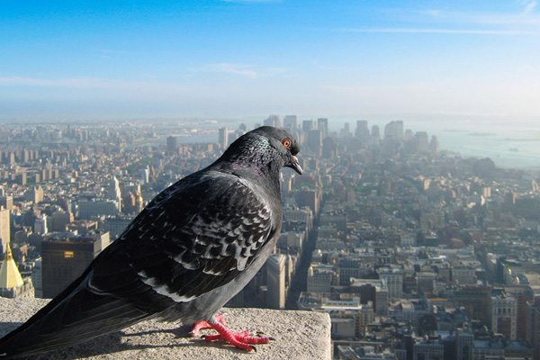 How Our World Would Look If You Were A Bird