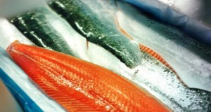 Norwegian Scientists Warn Against Eating Farmed Salmon Everything You Need to Know About Farmed Fish
