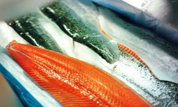 Norwegian Scientists Warn Against Eating Farmed Salmon: Everything You Need to Know About Farmed Fish