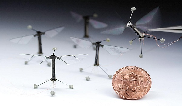 Rise Of The Insect Drones
