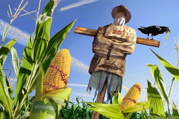 Roundup Accumulates in GMO Food, Proving Its Lack of Safety