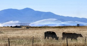 "State of the Farm and Water Report for California ""It's Just Not There"