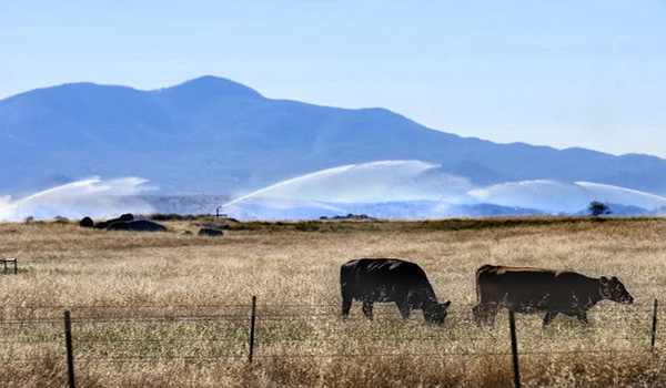 """State of the Farm and Water Report for California """"It's Just Not There"""