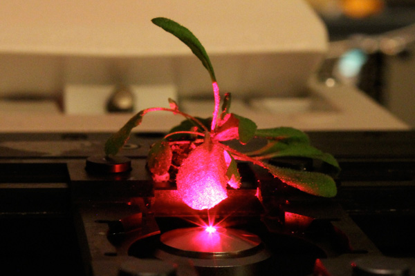 Forget GMOs, scientists are creating bionic plants