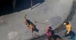 Graphic Man Throws Bricks At German Shepards, What Happens Next Is INSANE!