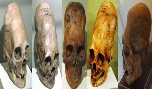Karen Hudes Rebuttal Homo Capensis Proof Provided