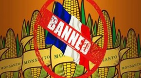 Monsanto's 'healthier environment' ads banned in South Africa