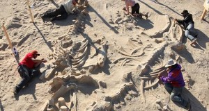 Mystery behind astonishing five-million-year-old whale graveyard revealed
