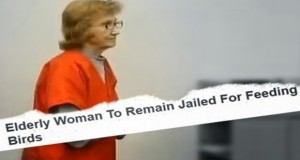 Sleep Soundly, America 81-Year-Old Lady Jailed for Feeding Birds