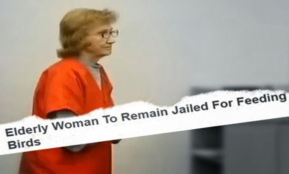Sleep Soundly, America: 81-Year-Old Lady Jailed for Feeding Birds