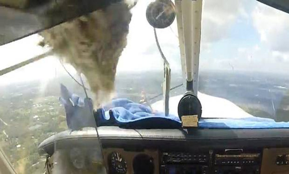 Watch the moment a bird crashes though a cockpit window - and the pilot calmly lands his plane in safety