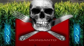 10 Scientific Studies Proving GMOs Can Be Harmful To Human Health