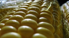 California GMO Labeling Bill Passes Senate Committee