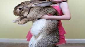 Meet The Real-Life Easter Bunny