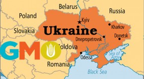 'Cui Bono' Over Ukraine: Monsanto Setting Up GMO Seed Corn Business in Ukraine