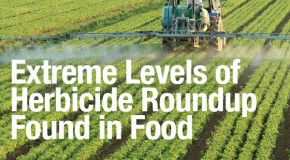 Extreme levels of herbicide found in Monsanto's genetically modified soy