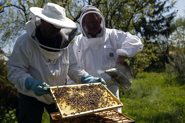 THE HONEYBEE POPULATION IS COLLAPSING — Here's The Awful Way That Will Affect The World