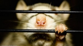 11 Ways Our Society Treats Us Like Caged Rats: Do Our Addictions Stem from that Trapped Feeling?