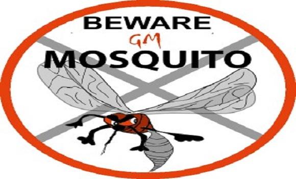 Beware the new 'Breakthrough' Transgenic Mosquitoes