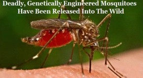 GMO Mosquito Trial Has Reverse Effect, Causes Dengue Emergency