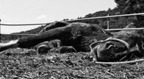Eating Radiation Killing CA Horses – Vets Say 'Mystery'