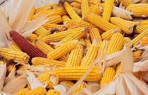 Govt approves fines for improper GMO labeling