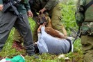 Israeli settlers unleash dog pack on Palestinian kids
