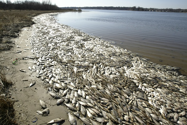 Mass Dead Fish Phenomenon Reported at All Coast Lines of The US