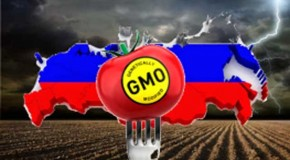 Russia Moves to Toughen GMO Food Sanctions, Introduces Fines for Vague Labeling