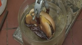 This is What Happens When You Dunk a McDonald's Cheeseburger in Stomach Acid [WATCH]