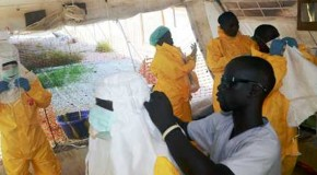 UN warns West Africans to stay away from fruit bats as Ebola spreads