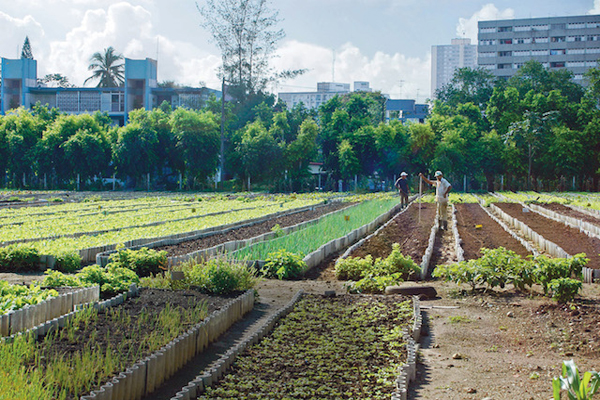 Across the US, Cities Struggle to Figure Out How to Accommodate Urban Farming