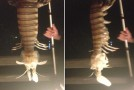 Fisherman Pulls Freaky Giant Mantis Shrimp Out Of Water