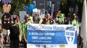 Here We Go Again: Monsanto Spends Millions to Defeat State's GMO Labeling Effort