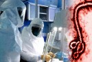 Is A Possible Ebola Cure Being Hidden From the Public?